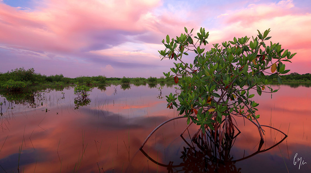 Constance Mier Photography - mangrove waterscapes