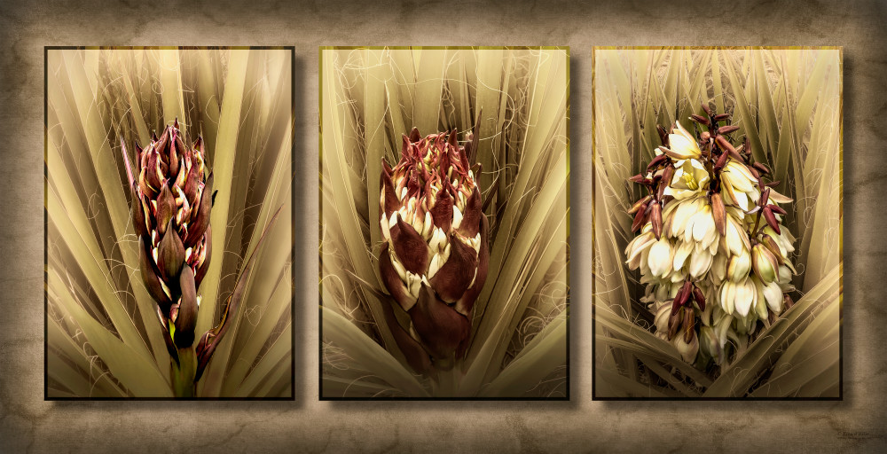 Yucca Blooming, d'Ellis Photographic Art photographs, Elsa