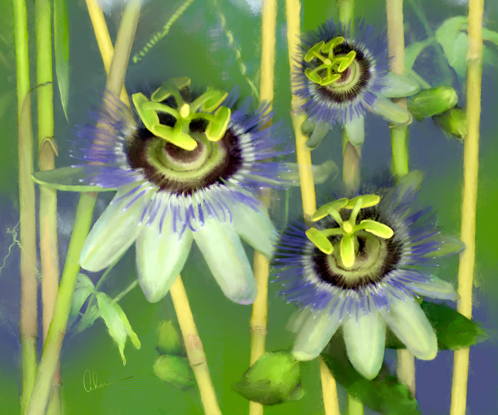 Passion Flowers with Bamboo, an art print from an original painting by Mary Ahern the artist.