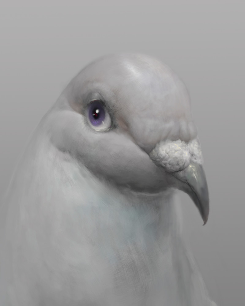 "Burton Gray's ""PETER,"" painting of a simple gray pigeon."