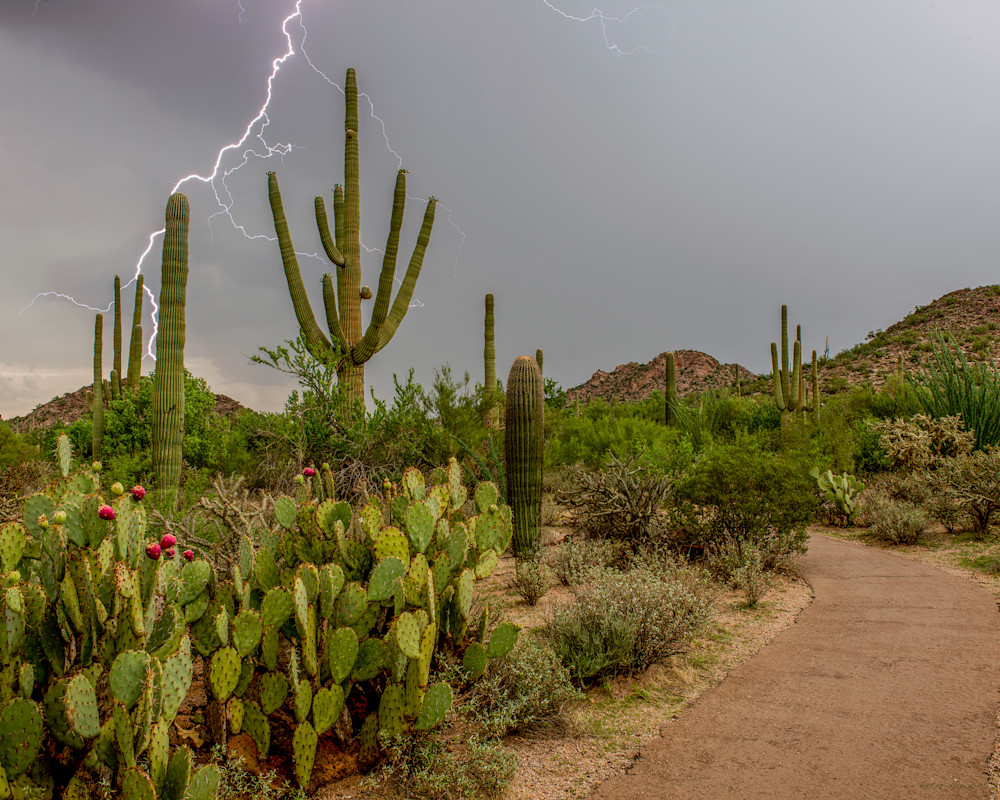 monsoon, lightning, storm, saguaro national park, tucson