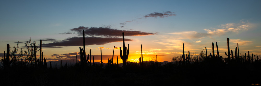 DP417 Saguaro Sunset Pano