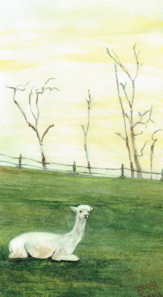 White Alpaca Art | Blissful Bonita Art Studio & Gallery