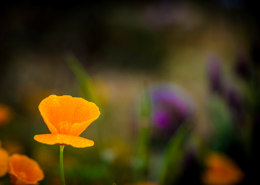 May Flowers Photograph For Sale as Fine Art