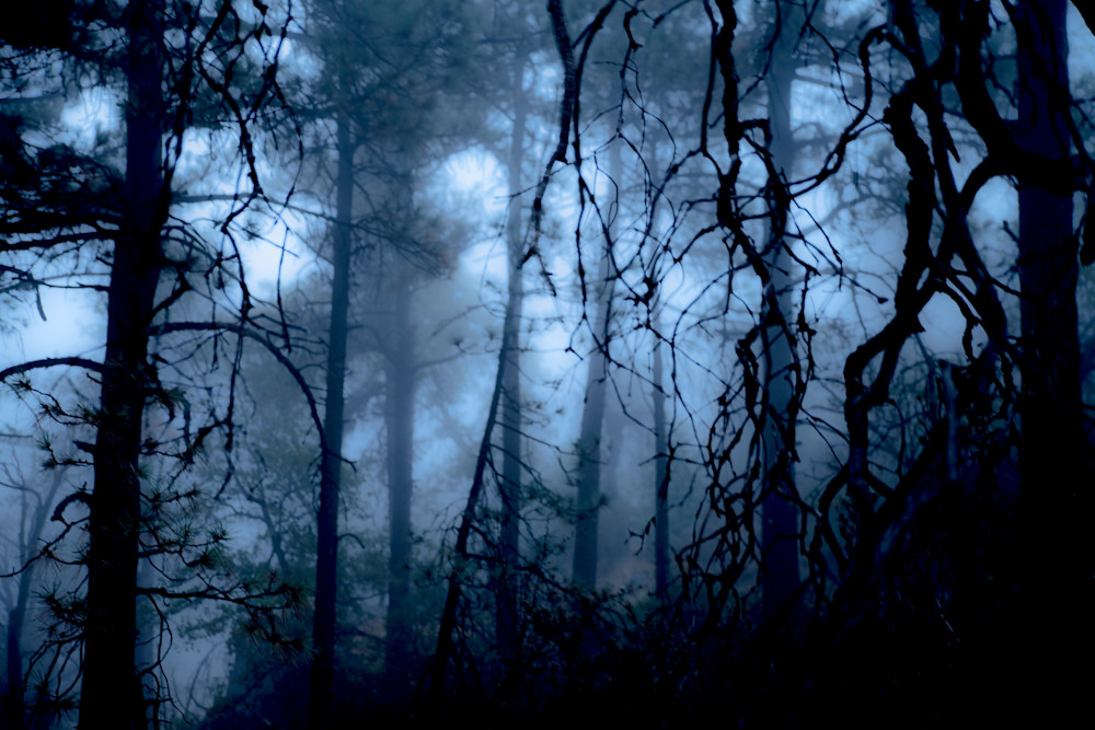 Mysterious Forest Photograph For Sale as Fine Art