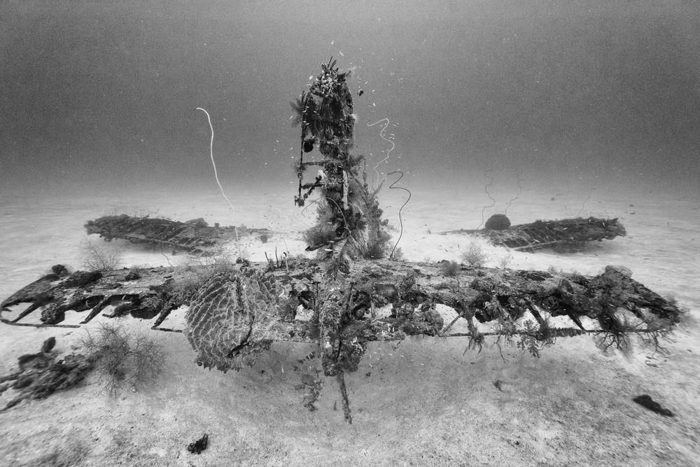 Corsair Fighter Plane Wreck Tail, Solomon Islands