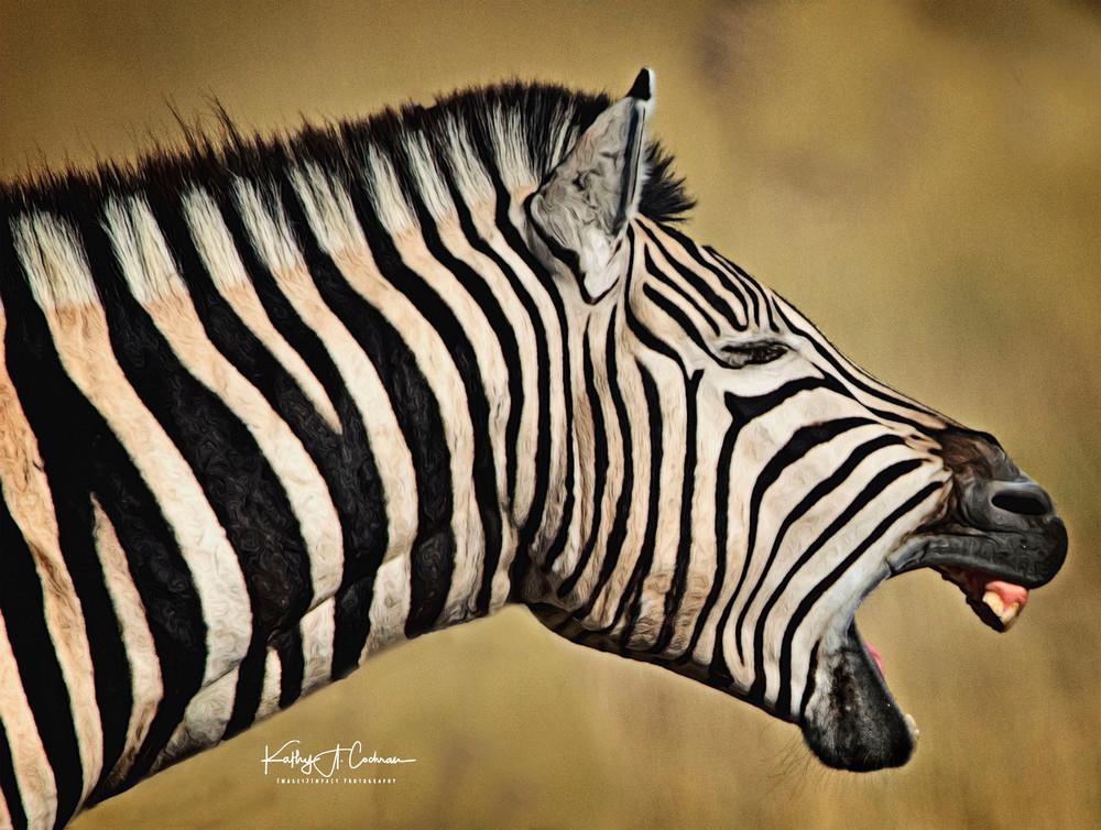 Zebra Yawn
