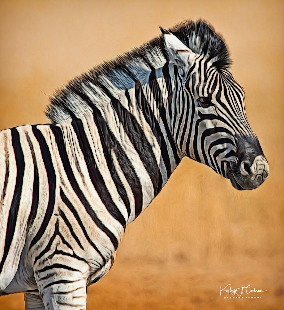 Zebra Foal Portrait Photography Art | Images2Impact