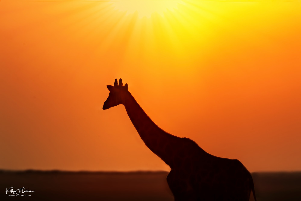 Giraffe Silhouette Photography Art | Images2Impact