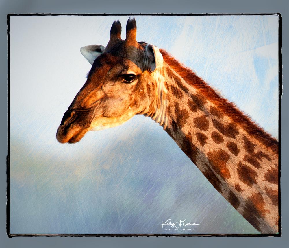 Giraffe On Blue Photography Art | Images2Impact