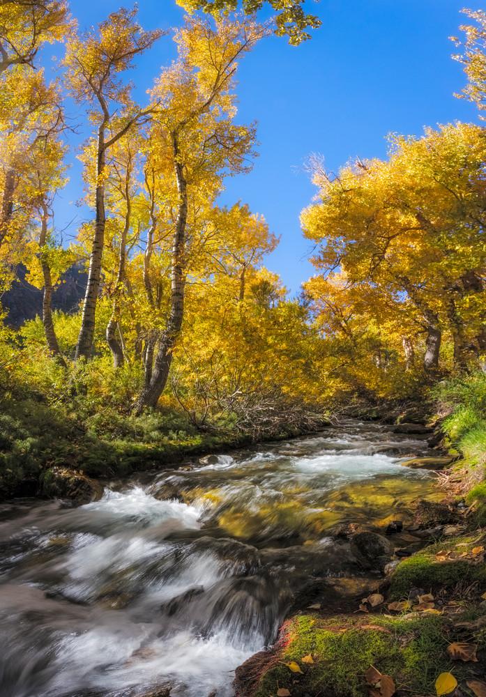 McGee Creek Aspens