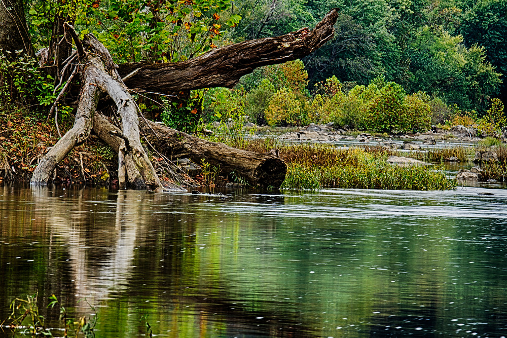 A Fine Art Photograph of Great Falls Reflection of Tree Trunks by Michael Pucciarelli