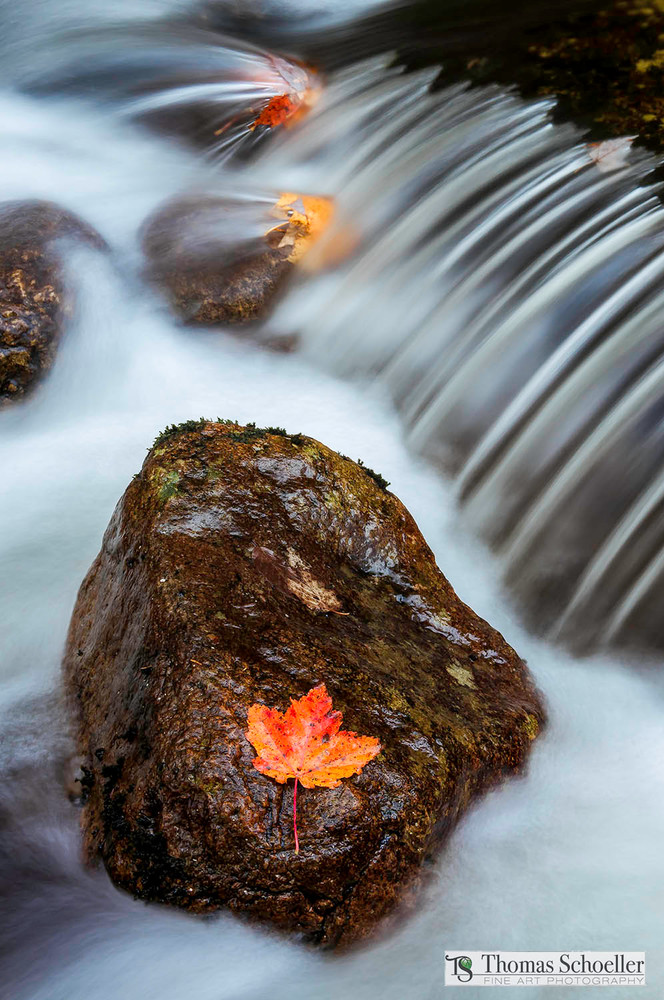 Nature's delicate balance captured in this colorful autumn fine art print/ethereal mountain stream in Maine
