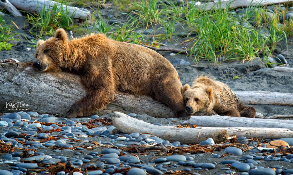 Bears Sawing Logs