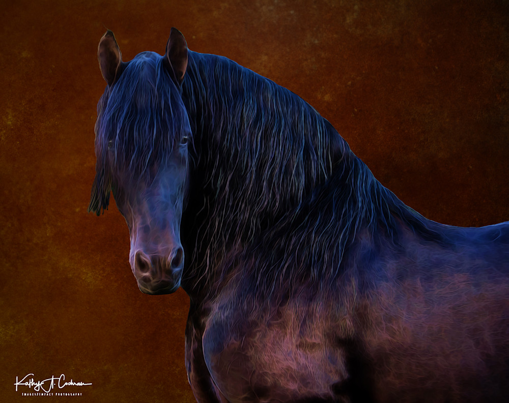 Portrait Of Fresian Photography Art | Images2Impact