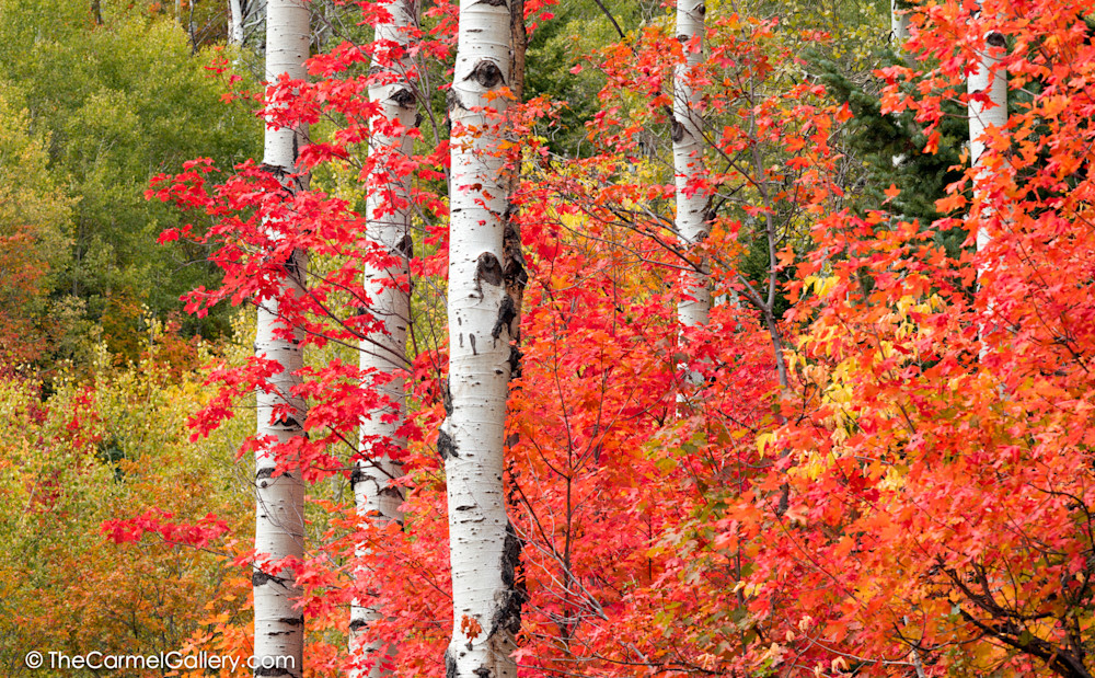 Red Autumn Colors Photo