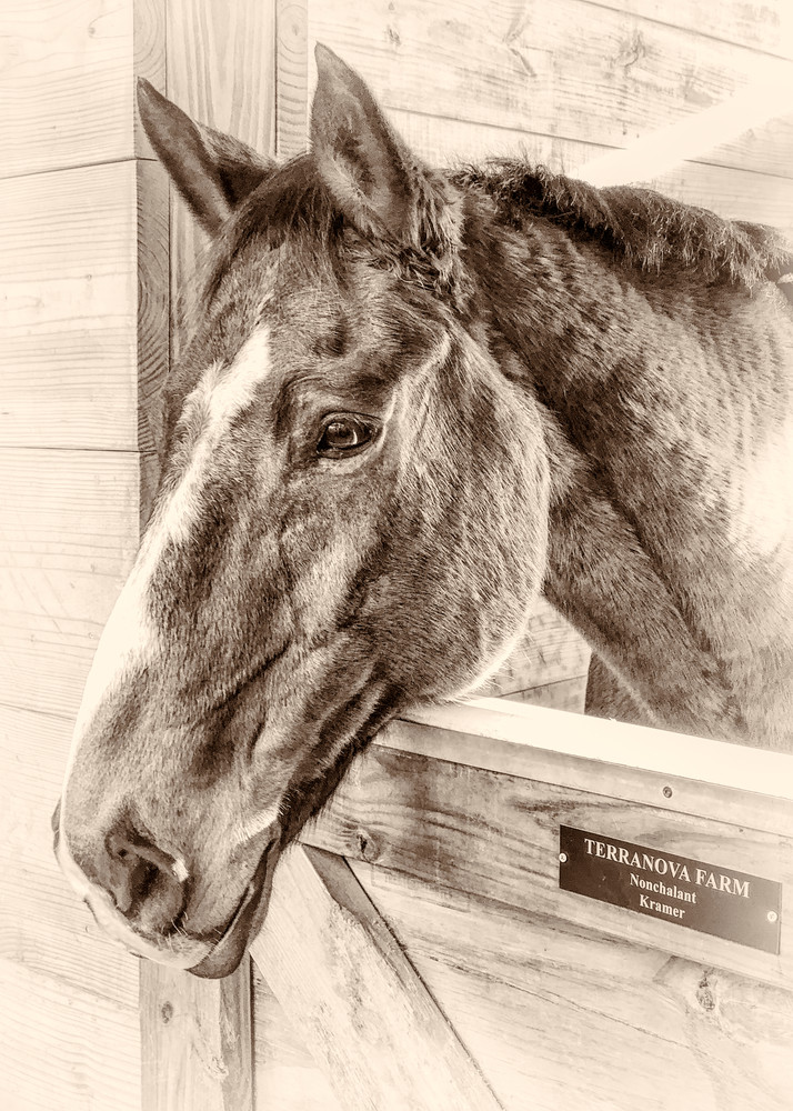 Portrait of an Old Campaigner, sepia