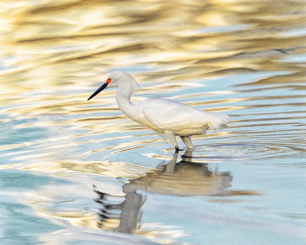 Snowy Egret Reflected, Blue & Gold    Photography Art | Carol Brooks Parker Fine Art Photography