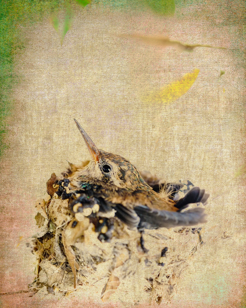 Feathered Nest Photography Art | Carol Brooks Parker Fine Art Photography