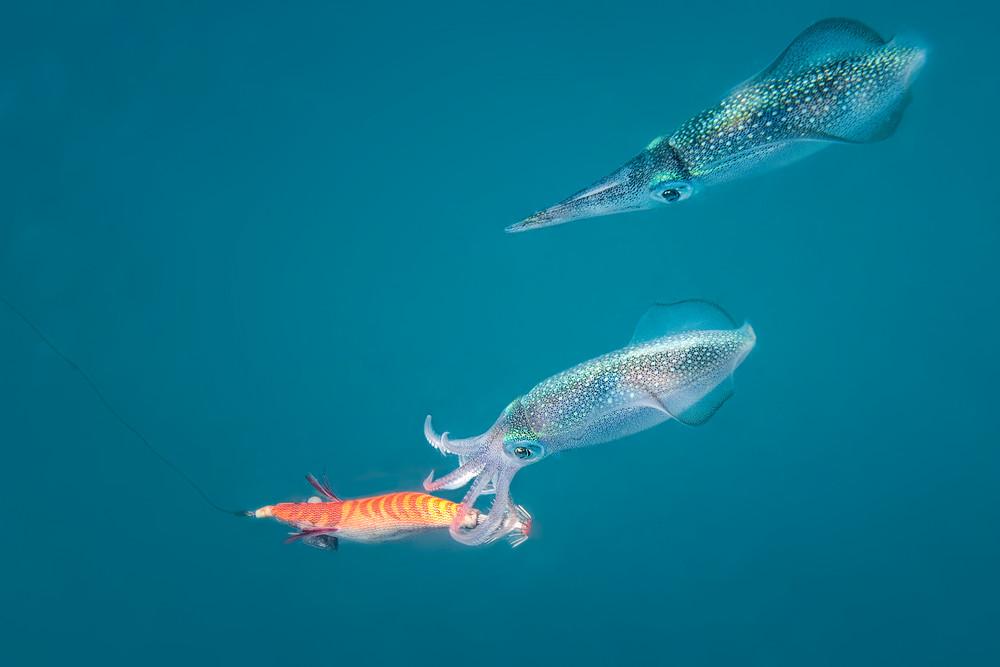 Squid Lure - Naviti, Fiji 2011