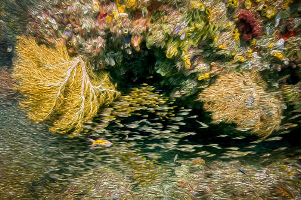 Coral Dreams #2 AE - Raja Ampat, Indonesia 2013
