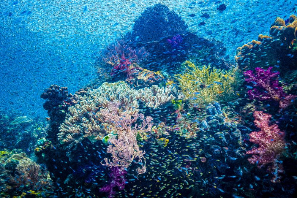 Coral Dreams #3 AE - Mayhem Reef - Raja Ampat, Indonesia 2013
