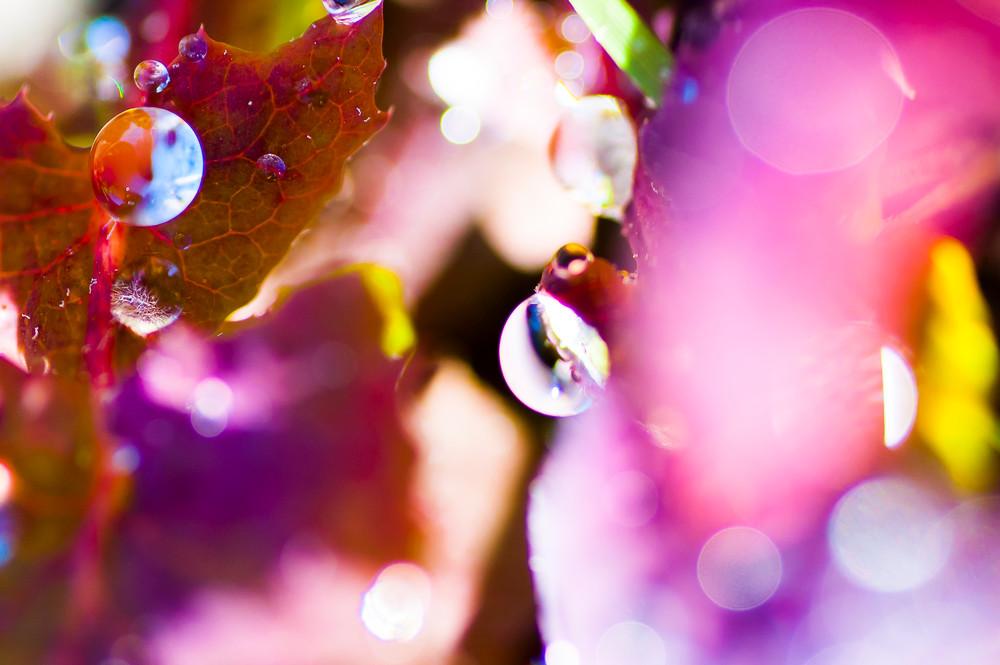 Pl#001 Photography Art | Scott David Gordon Photography
