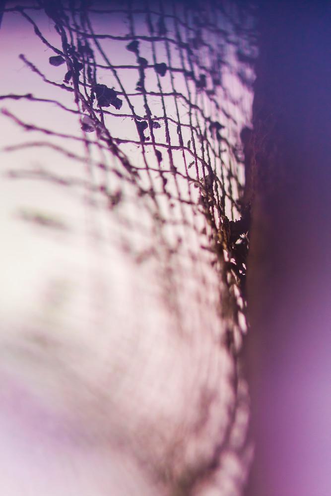 Pl#012 Photography Art | Scott David Gordon Photography