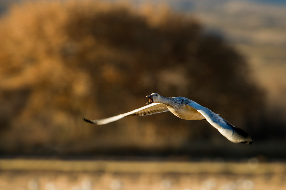 Left Behind - Bosque del Apache, Socorro, New Mexico 2010