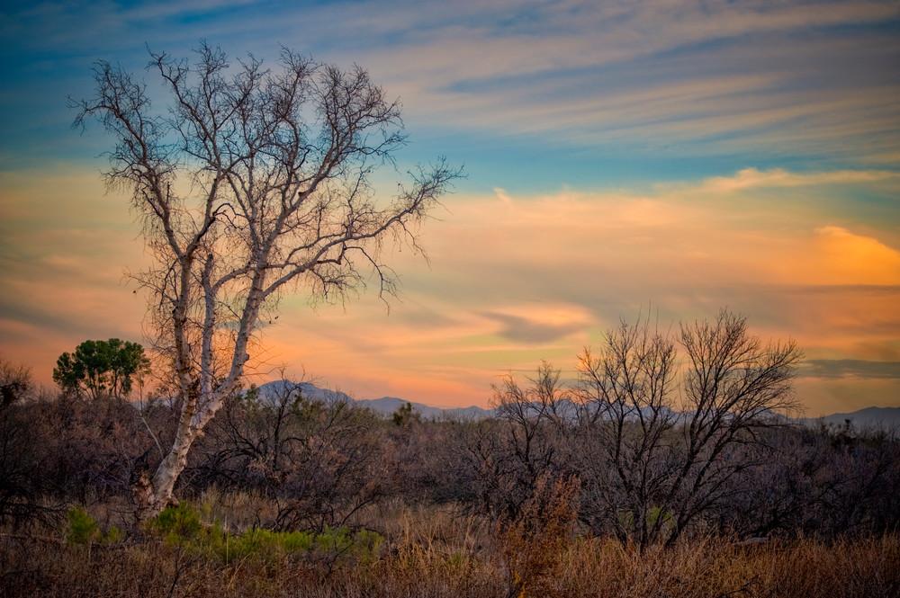 Sabino Creek Winter Landscape #2 - Tucson, Arizona 2009