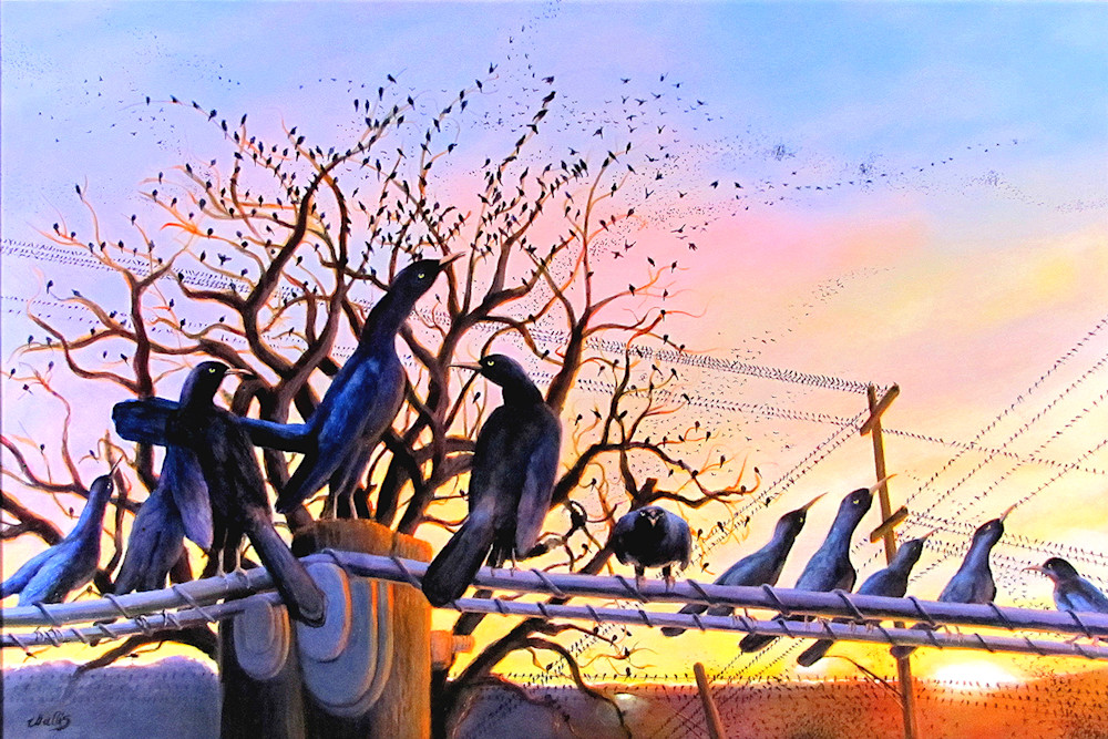 The Grackles Are Coming