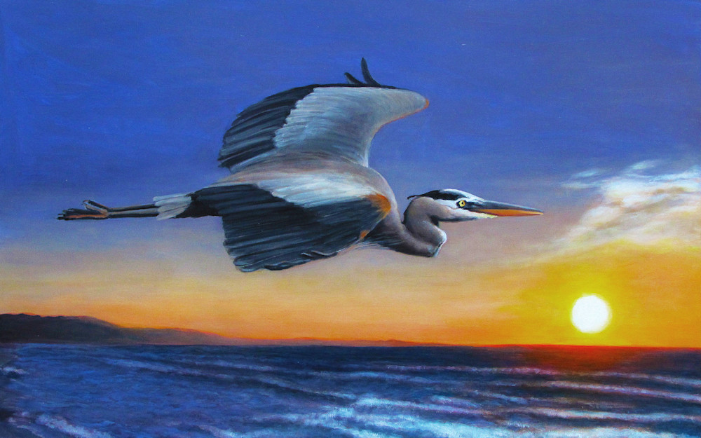 Great Blue Heron Sunrise Flight