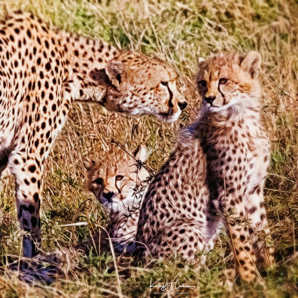 Painted Cheetahs Photography Art | Images2Impact