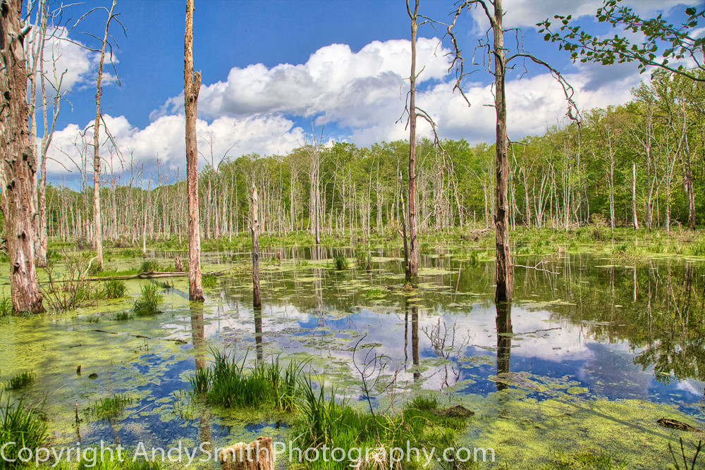 fine art photograph of a beautiful day  near Peters Valley, NewJersey