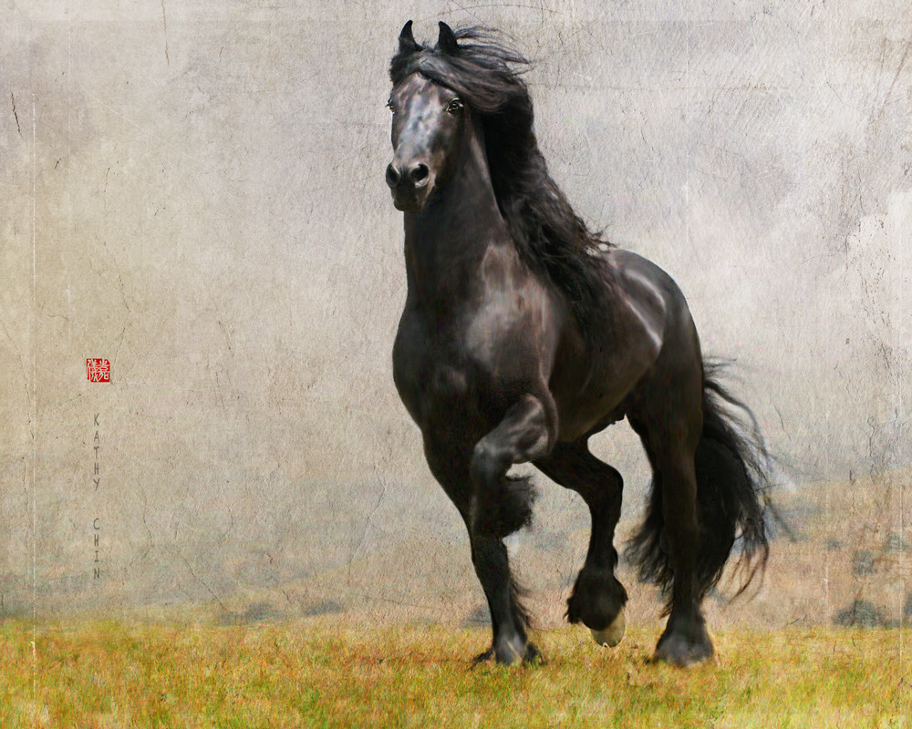 """""""Pride"""" is a horse photograph available for sale. This art was done by photo artist Kathy Chin"""
