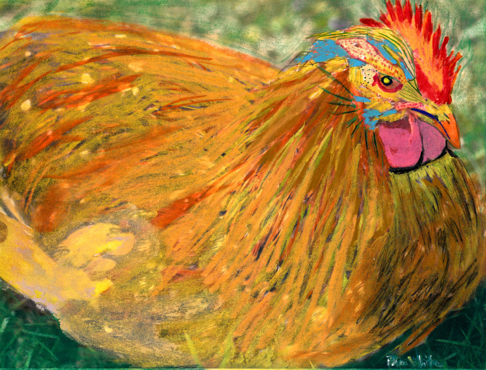 Sitting Chicken Art | Pam White Art