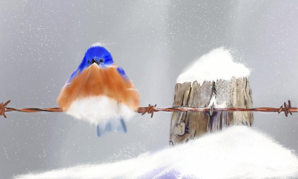 Snowy Blue Bird Art   Dave Fox Studios