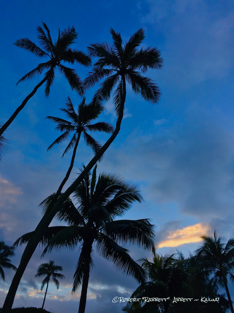 Palms at Sundown in lovely Kailua, Hawaii Prints by Robert Abbett Art! Kailua, Hawaii