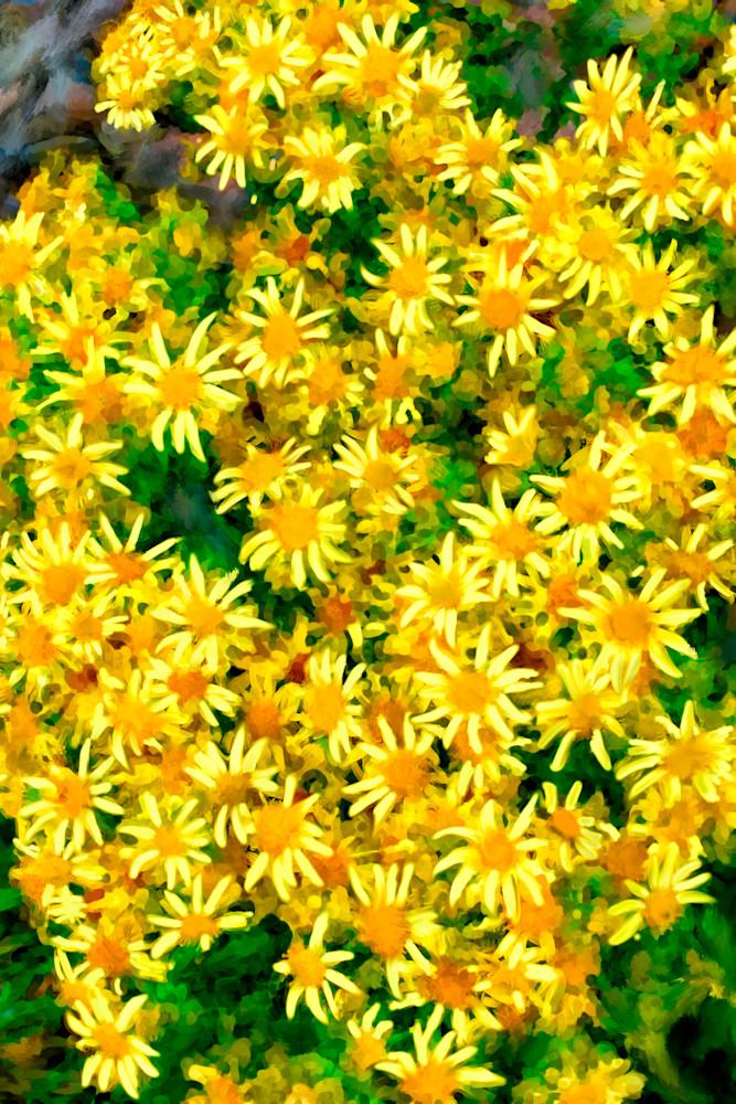 Scottish Yellow Flowers Art   Dave Fox Studios