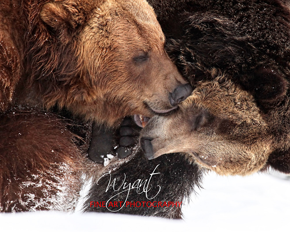 Bear Play:  Shop Fine Art Photography | Jim Wyant, Master Craftsman (317)663-4798