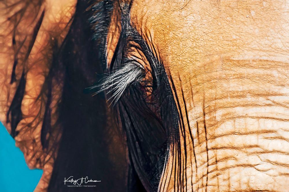 Elephant Lashes