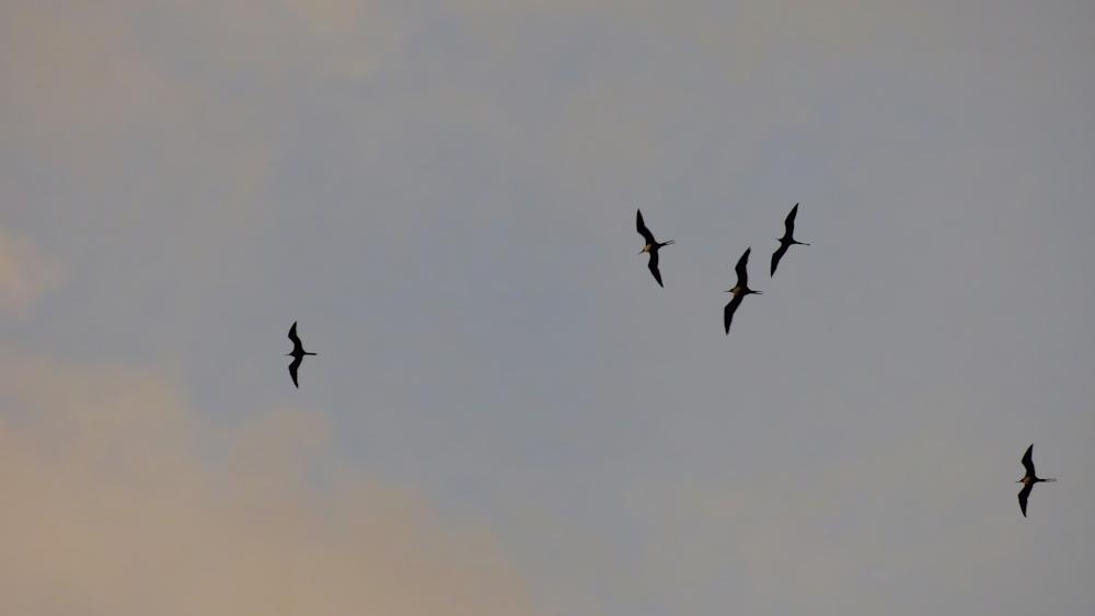 """Iva Birds float above me"