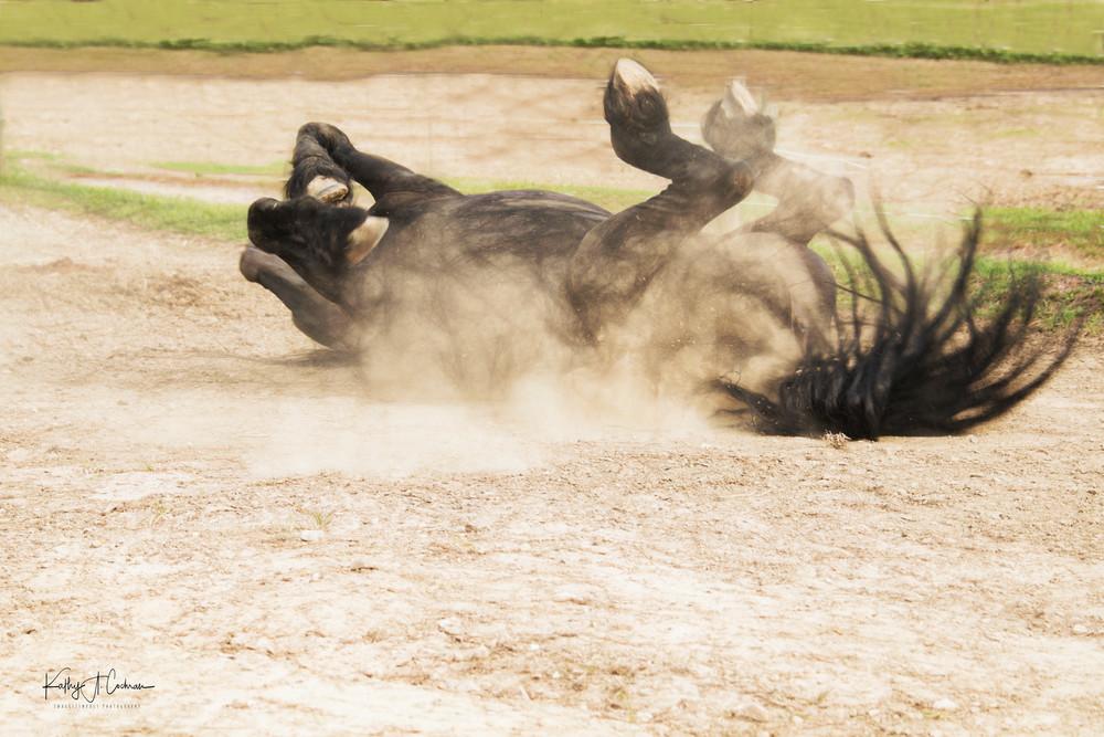 Dusty Frolic Photography Art   Images2Impact