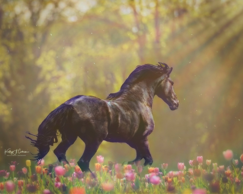 Tulip Fantasy  Photography Art   Images2Impact