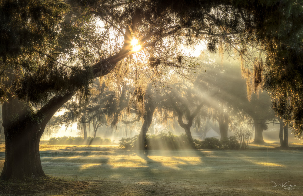 A Glorious Morning  Photographic Art