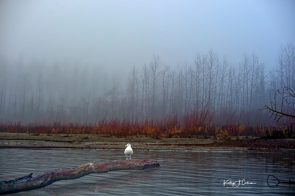 Foggy Skagit Photography Art | Images2Impact
