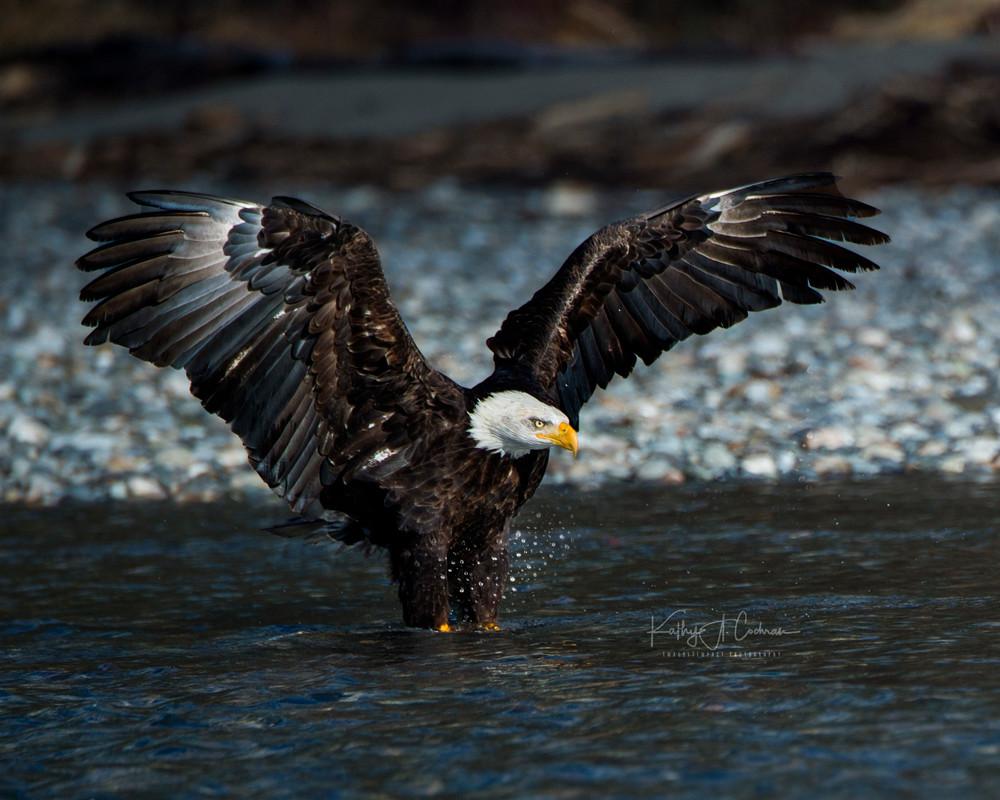 Water Landing Photography Art | Images2Impact