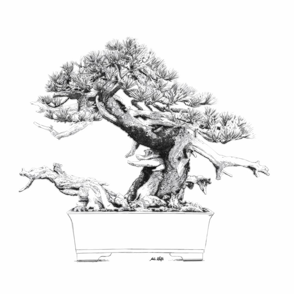 "Digital etching by Eric Wallis titled ""Bonsai One."""