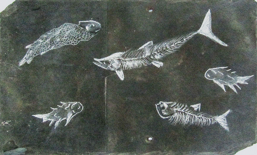 Devonian Fishes