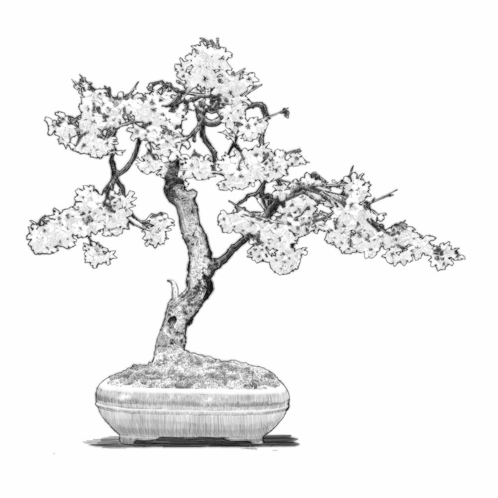 "Digital etching by Eric Wallis, inventor of the technique, titled, ""Bonsai Three."""